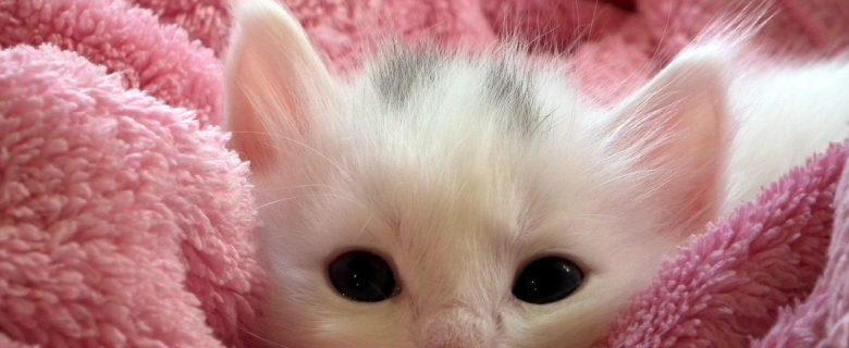 En kattunge med filt