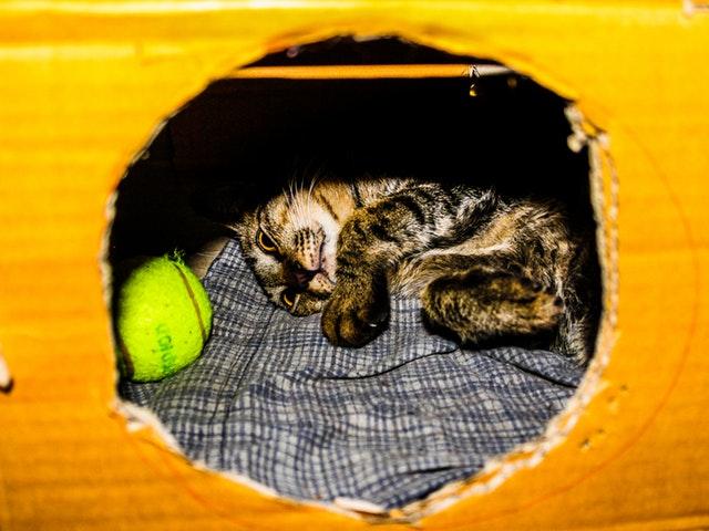 En katt i en kartong